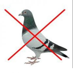 Devices against Birds