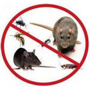 Ultrasonic Devices Against Rodents